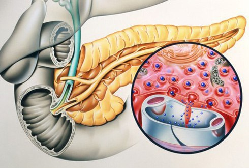 Гормон инсулин — что нужно знать