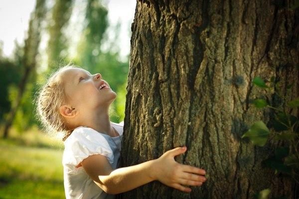 Деревья лечат, но как?